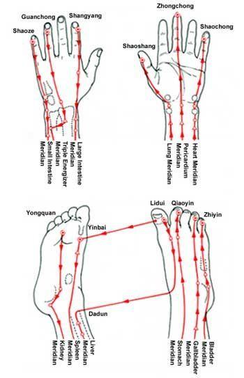 meridians ending in digits hand meridian feet meridian